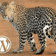 WordPress Gepard